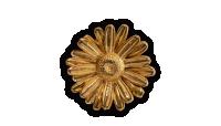 En ægte marguerit forgyldt med 24 karat guld